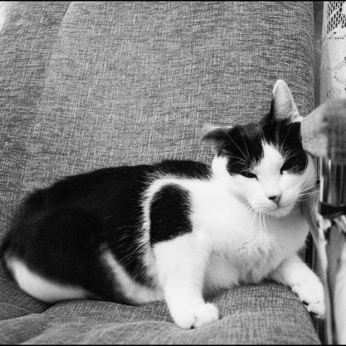 Zdjęcia kotów co z ludźmi mieszkają